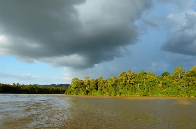 マレーシアのキナバタンガン川、ボルネオ島の熱帯雨林 Premium写真