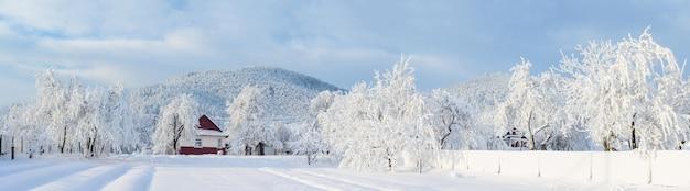 魔法の冬の雪に覆われた木 Premium写真