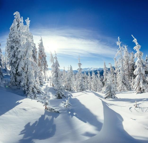 雪に覆われた冬の風景の木 Premium写真