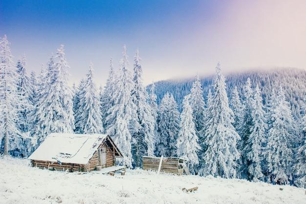 雪に覆われた木の冬の風景 Premium写真