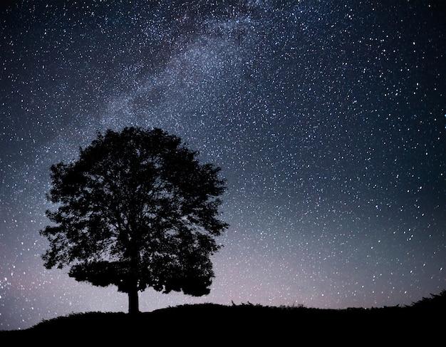 夜の星空と丘の上の木のシルエットのある風景します。孤独な木、流れ星と天の川。 無料写真