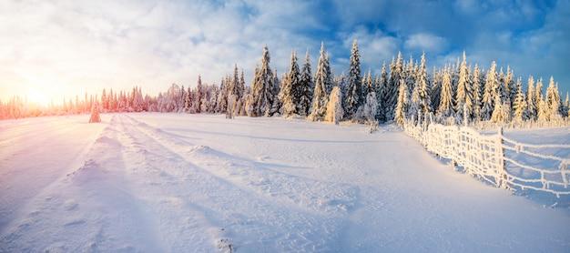 霜の冬の風景の木 Premium写真