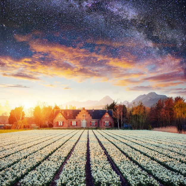 Красивое поле неба и гиацинты ландшафта. Premium Фотографии