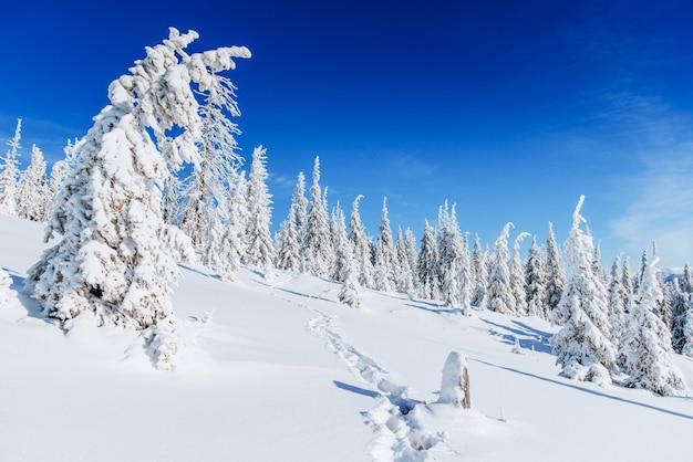 幻想的な冬の風景、階段、山。カルパティア、ウクライナ、ヨーロッパ。 Premium写真