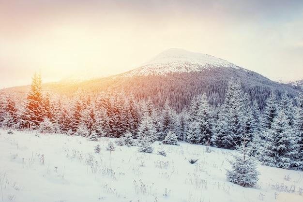 Таинственный зимний пейзаж с туманом, величественные горы Premium Фотографии