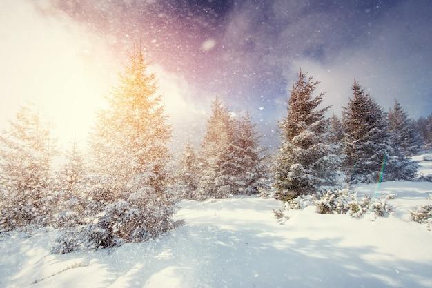 霧、雄大な山々と神秘的な冬の風景 Premium写真