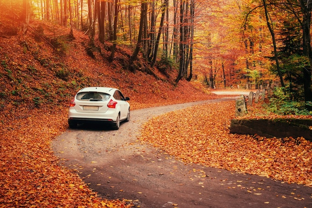森の小道に車。秋の風景。ウクライナ。ヨーロッパ Premium写真