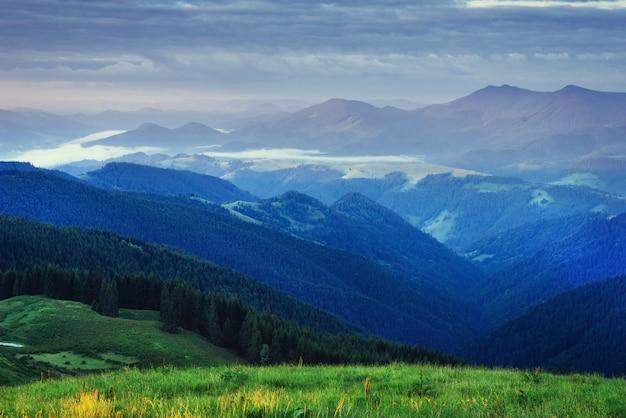 松の木の森。カルパチア人。ウクライナ、ヨーロッパ Premium写真