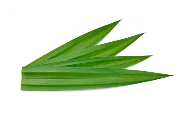 Свежие зеленые листья пандана Premium Фотографии