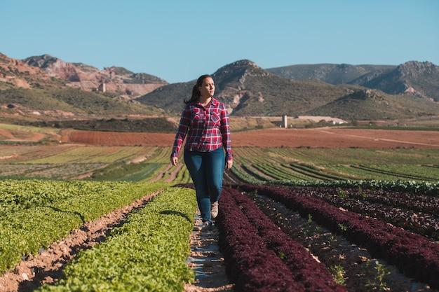 Молодая техническая женщина гуляя в поле салатов Premium Фотографии