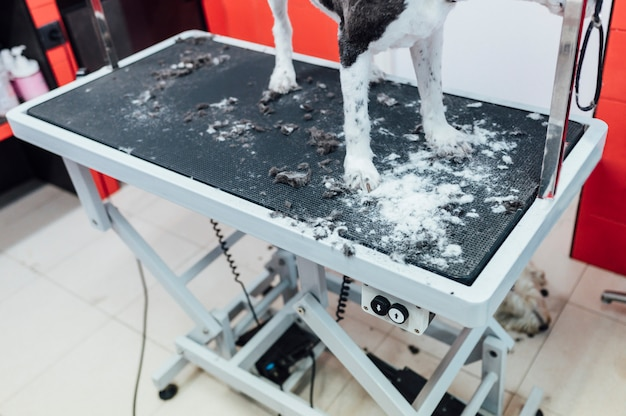 Свеже выбритая собака на столе для груминга Premium Фотографии