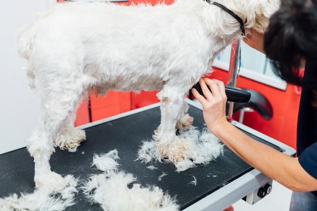 Женщина бреет белого пса Premium Фотографии