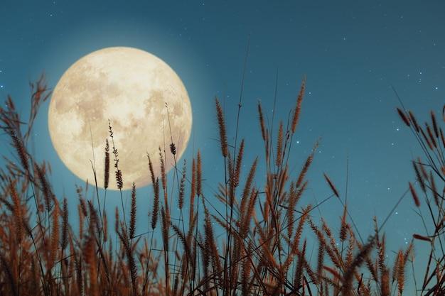 Прекрасная натура фантазии. дикая трава и полная луна со звездой. ретро стиль с старинные цветовые тона. осенний сезон, хэллоуин и день благодарения в ночном небе. осенний фон концепции. Premium Фотографии