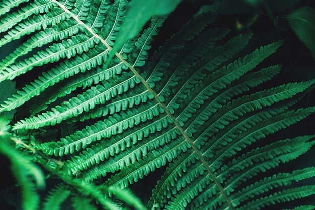 熱帯の濃い緑の葉のトーンの花の背景 Premium写真