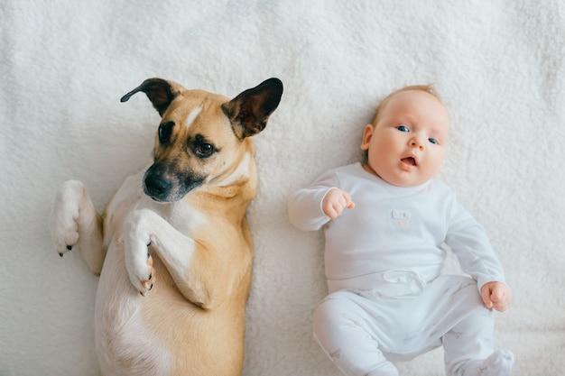 面白い子犬のベッドの上で横になっている生まれたばかりの赤ちゃん。 Premium写真