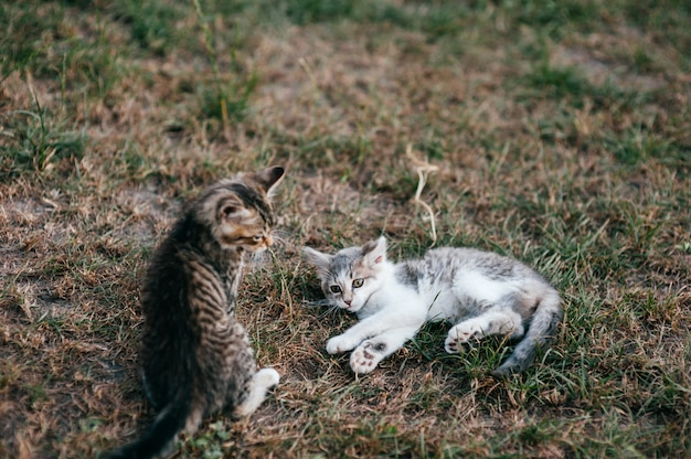 草で遊ぶ子猫 Premium写真