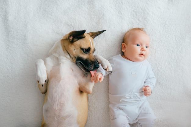 面白い子犬のベッドの上で横になっている生まれたばかりの赤ちゃんのトップの肖像画。 Premium写真