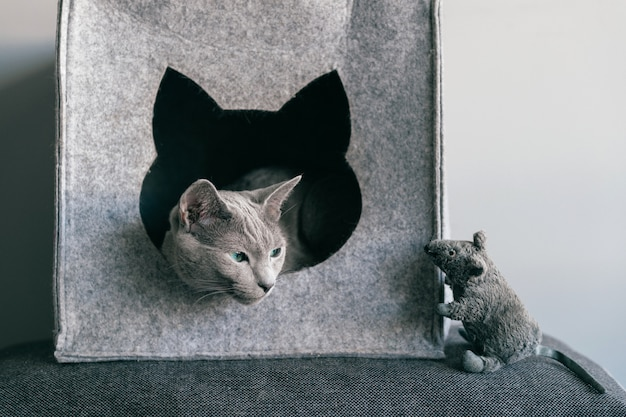 灰色の子猫の肖像画は、猫の家でおもちゃのマウスを楽しんでいます。 Premium写真