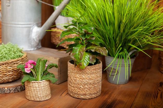 木製の床にストローポットのクロトン観葉植物。別の鍋でさまざまな家の植物のコレクション。 Premium写真