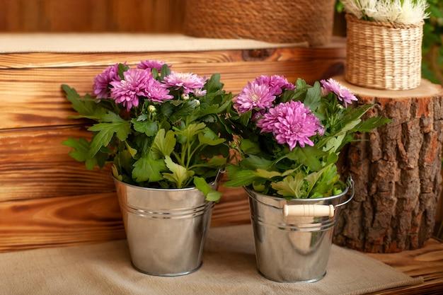 テラスの鍋で育つ花束菊。園芸。裏秋の庭に鉢植えの菊。 Premium写真