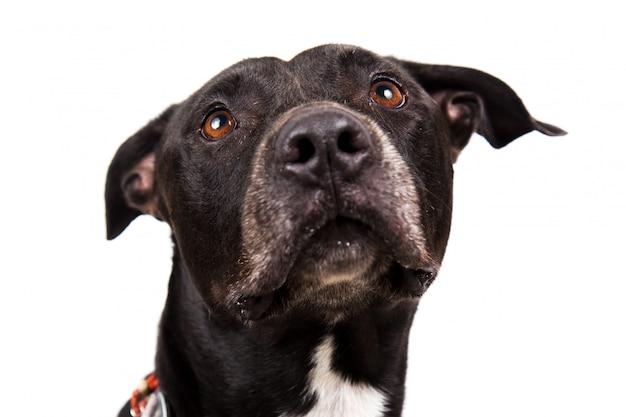 Милая черная собака на белом Premium Фотографии