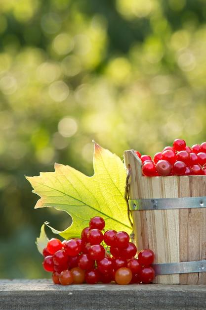 Жестяное ведро со спелыми ягодами калины в саду Premium Фотографии