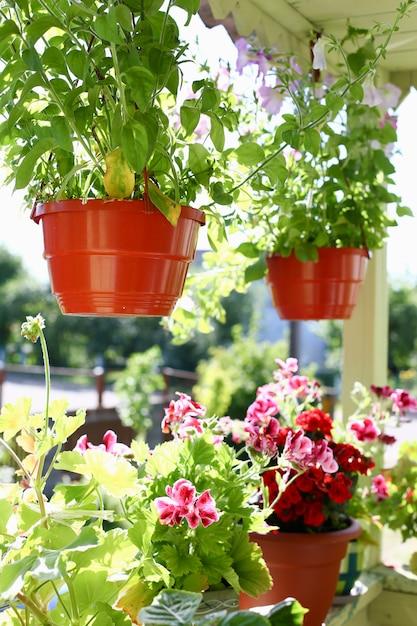 バルコニーの窓枠窓春背景に鉢花 Premium写真