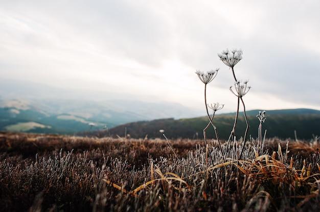 山の冬の朝に冷凍草のクローズアップ。 Premium写真