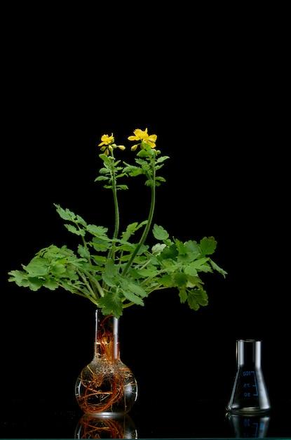 黒の医療フラスコで新鮮な植物の枝 Premium写真