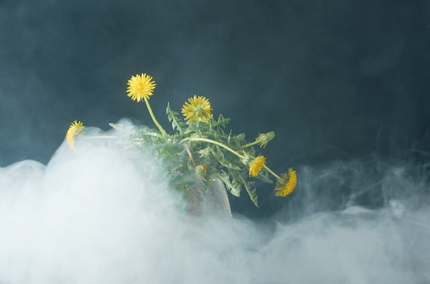 Одуванчик с корнями и листьями в стеклянном чайнике Premium Фотографии