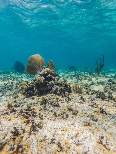青い水と水中のサンゴ Premium写真