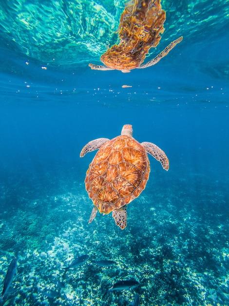 水中のツアー Premium写真