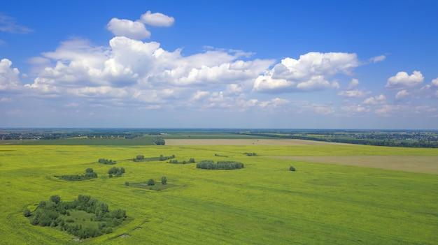 ひまわり畑の鳥瞰図 Premium写真