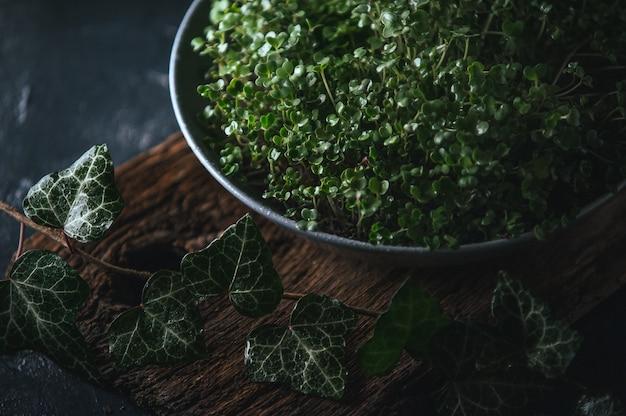 Микрогрин в сером блюде на деревянном деревенском Premium Фотографии