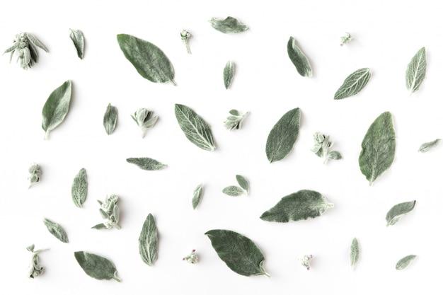 花、枝、葉、花びらの最小限のパターン Premium写真