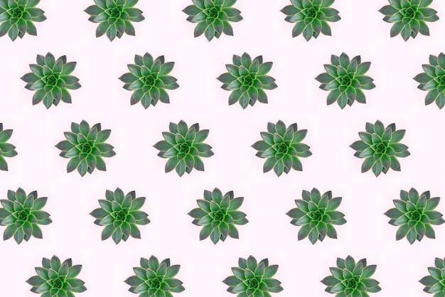 ピンクに分離された緑の多肉植物の美しいパターンのフラットレイアウト Premium写真