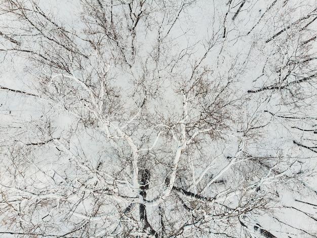 雪の空撮は針葉樹林のプランテーションをカバーしました。日光の下でトウヒの行。 Premium写真