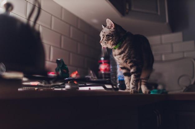 Кошка бегает по кухне ночью и будит хозяев с шумом. Premium Фотографии