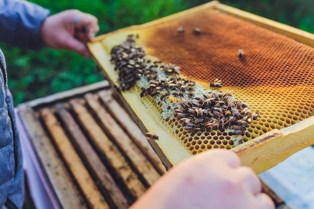 ミツバチの巣箱のフレーム。養蜂家が蜂蜜を収穫します。 Premium写真