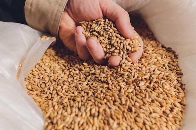 大豆の種を持っている農夫の手のまとまり。健康的な有機農産物。 Premium写真