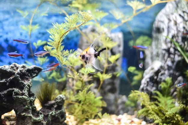 魚だらけの美しい水槽 Premium写真