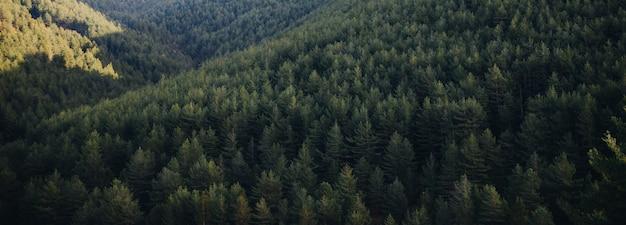 日の出山で春にグリー松の森の風景 Premium写真