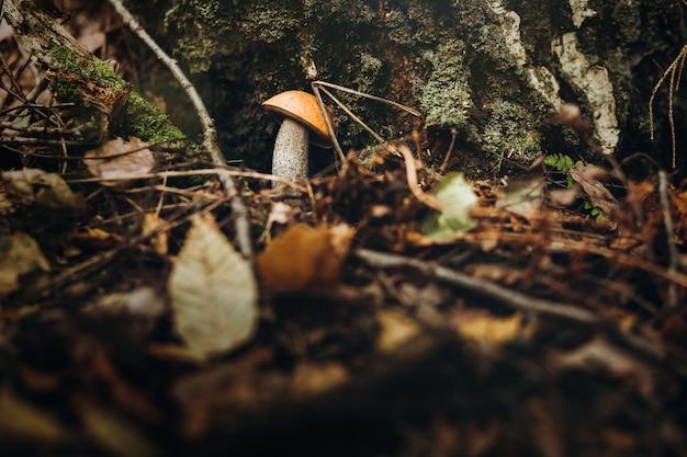 Красивый крупный план лесных грибов. Premium Фотографии