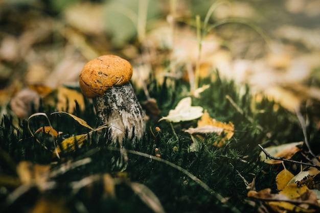 森のキノコの美しいクローズアップ。 Premium写真