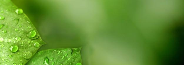 自然の緑の葉が美しく爽やかに見える Premium写真