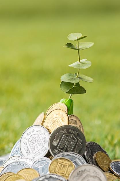 草の上のコイン 無料写真