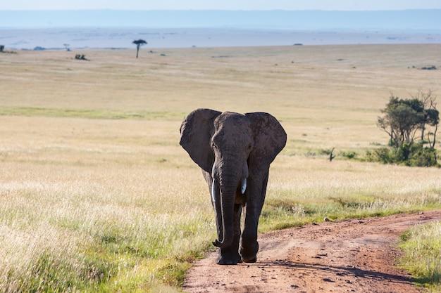 サバンナを歩くゾウ 無料写真