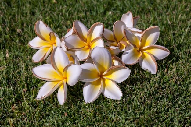 Белые цветы жасмина с листьями Бесплатные Фотографии