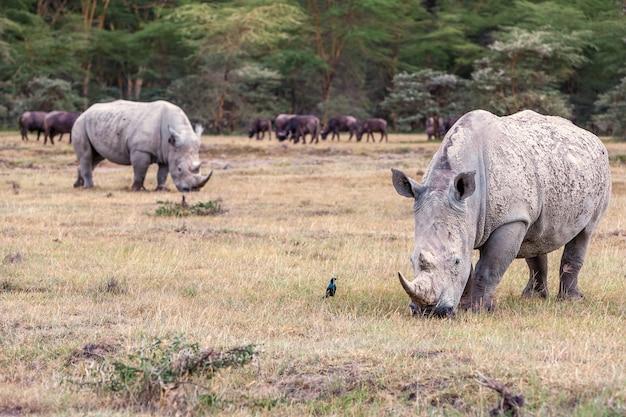 Носороги в саванне Бесплатные Фотографии
