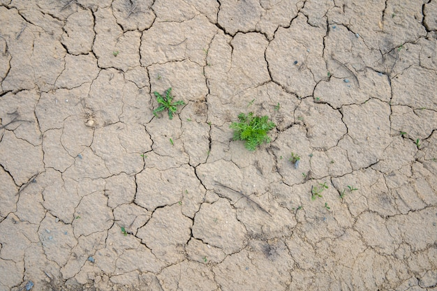 Растрескавшаяся засохшая почва, фон засухи Premium Фотографии